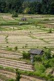 Agricoltura a terrazze di Bali Fotografia Stock Libera da Diritti