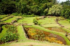 Agricoltura a terrazze su Kauai Immagini Stock