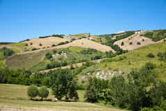 Agricoltura in Toscana - in Italia Immagini Stock Libere da Diritti