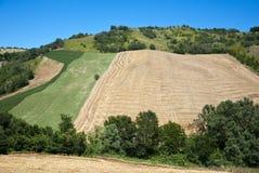 Agricoltura in Toscana - in Italia Fotografie Stock
