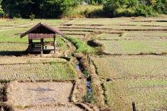 Agricoltura tradizionale Immagine Stock
