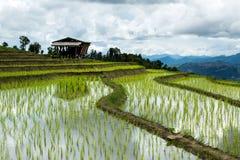 Agricoltura tradizionale nel MAI di Cheing, Tailandia del Nord Immagine Stock