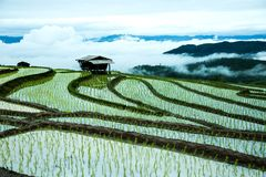 Agricoltura tradizionale nel MAI di Cheing, Tailandia del Nord Immagini Stock Libere da Diritti