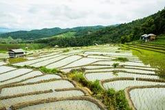 Agricoltura tradizionale nel MAI di Cheing, Tailandia del Nord Immagini Stock