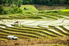 Agricoltura tradizionale nel MAI di Cheing, Tailandia del Nord Immagine Stock Libera da Diritti