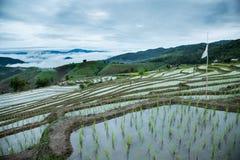 Agricoltura tradizionale nel MAI di Cheing, Tailandia del Nord Fotografie Stock