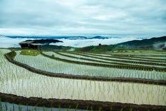 Agricoltura tradizionale nel MAI di Cheing, Tailandia del Nord Fotografie Stock Libere da Diritti