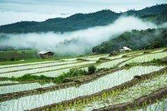 Agricoltura tradizionale nel MAI di Cheing, Tailandia del Nord Fotografia Stock Libera da Diritti