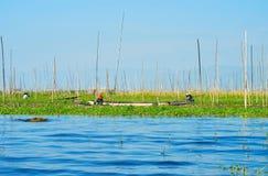 Agricoltura tradizionale sul lago Inle, Myanmar Immagine Stock Libera da Diritti