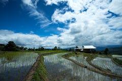 Agricoltura tradizionale in Tailandia del Nord Immagini Stock Libere da Diritti
