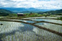 Agricoltura tradizionale in Tailandia del Nord Fotografia Stock Libera da Diritti