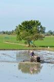 Agricoltura in TThailand Immagini Stock