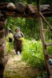 Agricoltura turca della donna Immagini Stock Libere da Diritti