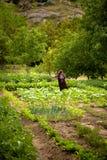 Agricoltura turca della donna Fotografia Stock