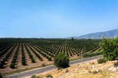 Agricoltura in Turchia Fotografie Stock