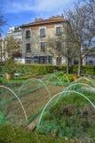 Agricoltura urbana Fotografia Stock Libera da Diritti