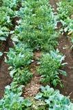 Agricoltura urbana Immagini Stock