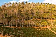 Agricoltura varia in una collina del pendio nel Brasile Fotografia Stock Libera da Diritti