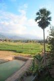 Agricoltura verde della pianta di scuola materna del campo Fotografie Stock