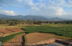 Agricoltura verde della pianta di scuola materna del campo Fotografie Stock Libere da Diritti