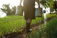 Agricoltura, verde, natura Fotografie Stock
