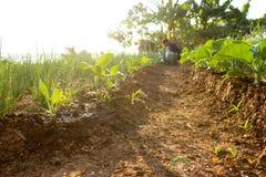 Agricoltura, verde, natura Immagini Stock