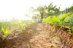 Agricoltura, verde, natura Immagine Stock Libera da Diritti