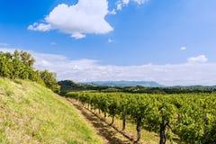Agricoltura, vigna in primavera e cielo blu con le nuvole Immagini Stock