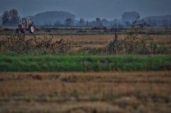 Agricoltural landskap Royaltyfri Bild