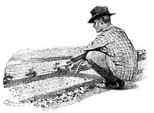Agricolture engraving, farmer hand sowing plants. Horticulture engraving - farmer hand sowing plants in prepared soil tracks Stock Photos