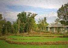 agricu wiejskiego ekologicznej hodowli Zdjęcie Royalty Free