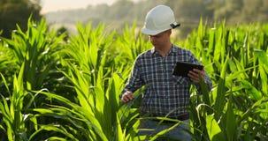 Agriculteur à l'aide de la tablette numérique, plantation cultivée de maïs à l'arrière-plan Application moderne de technologie de banque de vidéos