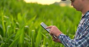 Agriculteur à l'aide de la tablette numérique, plantation cultivée de maïs à l'arrière-plan Application moderne de technologie de clips vidéos