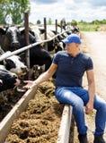 Agriculteur à la ferme avec des vaches laitières images libres de droits