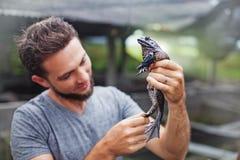 Agriculteur à la ferme de grenouille dans Bali photos stock