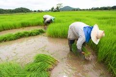 Agriculteur Photographie stock libre de droits