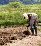 Agriculteur Photo libre de droits