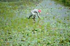 Agriculteur asiatique, delta d'étang de lotus, le Mékong photo libre de droits