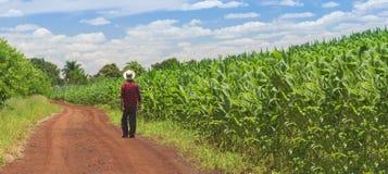Agriculteur avec le chapeau au champ de plantation de maïs Photos libres de droits