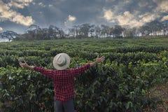 Agriculteur avec le chapeau regardant le champ de plantation de café photographie stock libre de droits