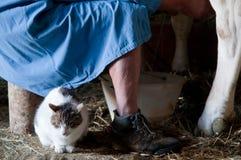 Agriculteur avec le chat dans la grange Photo stock