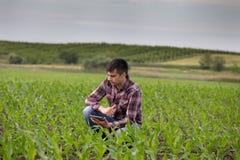 Agriculteur avec le comprimé dans le domaine de maïs au printemps Images stock