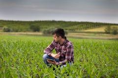 Agriculteur avec le comprimé dans le domaine de maïs au printemps Photo stock