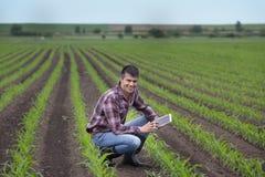 Agriculteur avec le comprimé dans le domaine de maïs au printemps Images libres de droits