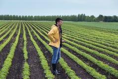 Agriculteur avec le comprimé dans le domaine de soja au printemps Images libres de droits