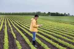Agriculteur avec le comprimé dans le domaine de soja au printemps Image libre de droits