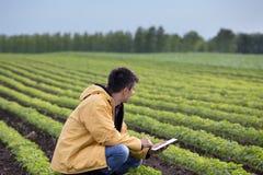 Agriculteur avec le comprimé dans le domaine de soja au printemps Images stock