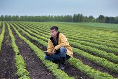 Agriculteur avec le comprimé dans le domaine de soja au printemps Photo libre de droits