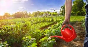 Agriculteur avec le jardin de arrosage de boîte Photographie stock libre de droits