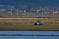 Agriculteur avec le tracteur dans le domaine de riz Images libres de droits